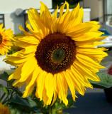 flowers_etc
