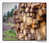 Weddersbie Woodpiles