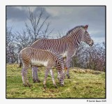 Big Stripes and Little Stripes