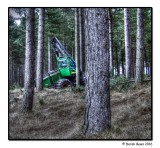 Clearing the Forest