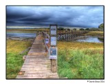 Aberlady Nature Reserve