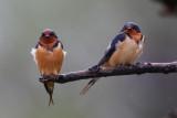 Birds at Magee Marsh