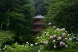 Gansen-ji Temple at Kyoto