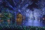 Kyosera Illuminations at Kyoto