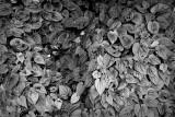 Grey Leaves