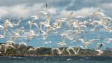 Terns Take Flight