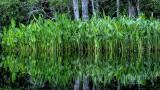 Lofton Creek