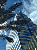 Fronds and Tower