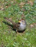 Bird 1A.jpg