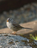 Bird 5A.jpg