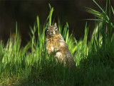 Squirrel 8A.jpg