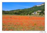Primavera als Ports de Morella.