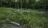 Emerald Ash Borer - Rowe Woods Damage