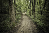 Rowe Woods Hiking Trail
