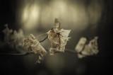 Leaves Past