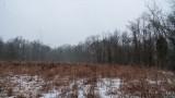 Rowe Woods Rain Melt