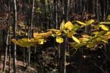 Autumn in Rowe Woods