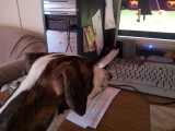 Watching Westminster 2012