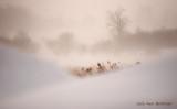 Misty Windchill