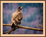 eagles_14