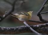 2013_birds