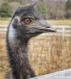 Mr. Emu