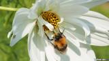 Pretty as a Bee
