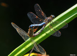 Dragonfly Action