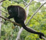 Monkeys of Nicaragua