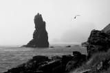 _DSC3191 - Sea Stack, Seagull and Fog