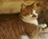 DSC01817 - Barn Cat, Meaney