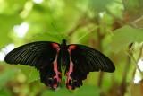 DSC04800 - Butterfly