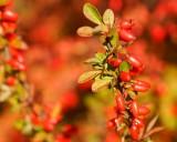 DSC05763 - Berries