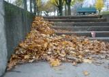 DSC06160 - Autumn Left-Overs