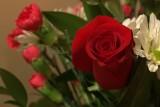 DSC07951 - Valentines
