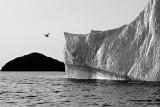 DSC01433 - Golfball Iceberg and Seagull