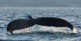DSC03104 - Like Water Off A Whale's Tail**WINNER**