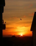 DSC05229 - Sunrise From My Living Room Window