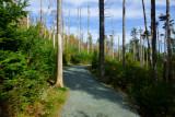 DSC02337 - Autumn on the Trail