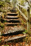 DSC02398 - Autumn Steps