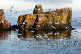 DSC05815 - A Few Seagulls
