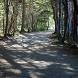 DSC07157 - Path