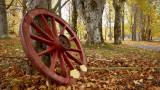 DSC07716 - Wagon Wheel
