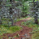 DSC07692 - Trail