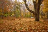 DSC07710 - Leaves 'n' Trees