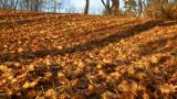 DSC07806 - Bed of Leaves