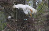 An Egret's Easter