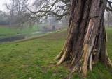 Carshalton Park