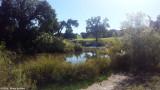 North San Gabriel River - 155728.jpg