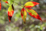 March 23rd 2012 - These are Leaves - 0437.jpg